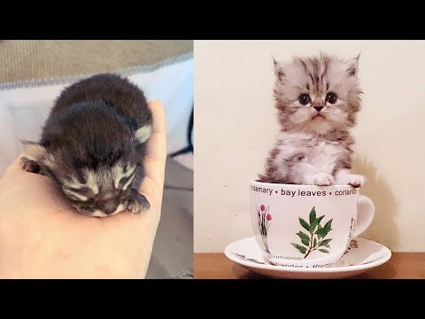 Cute Cat Video 😘 I Love Kittens 😍 Cute Cats Compilation 2019