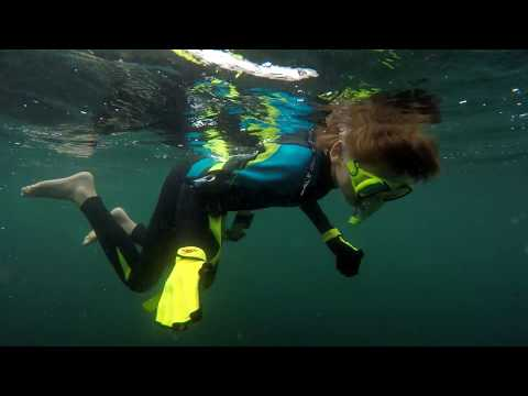 4K Seals Swim With Us And Some Crazy Fish. Fun Diving Nature Fishing Travel.