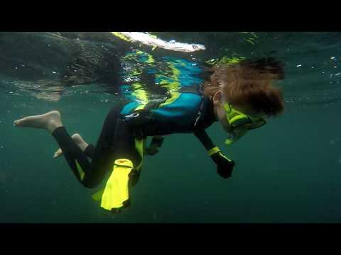 4K Ocean Is Alive: Seals & Fish Swim With Us. Fun Diving Nature Snorkeling Fishing Travel. CA OR WA.