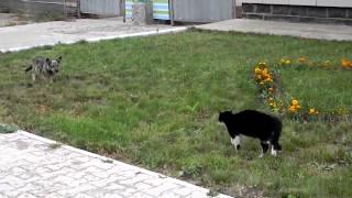 Кот против собаки. Кот победил
