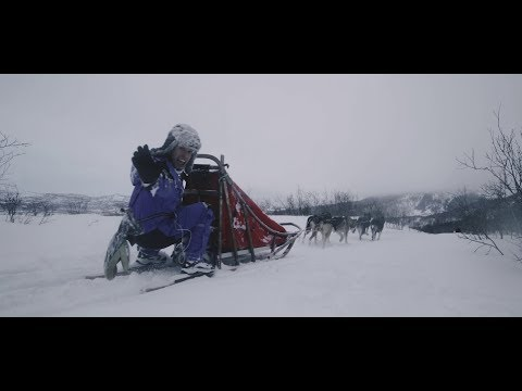 Dogsledding in northern Norway | Sortland, Vesterålen