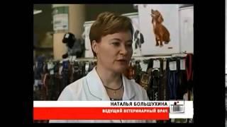 видео Корм для кошек сафари: отзывы ветеринаров