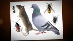 pest control northridge, 818-276-3225, exterminator northridge, roaches, fleas, San Fernando Valley