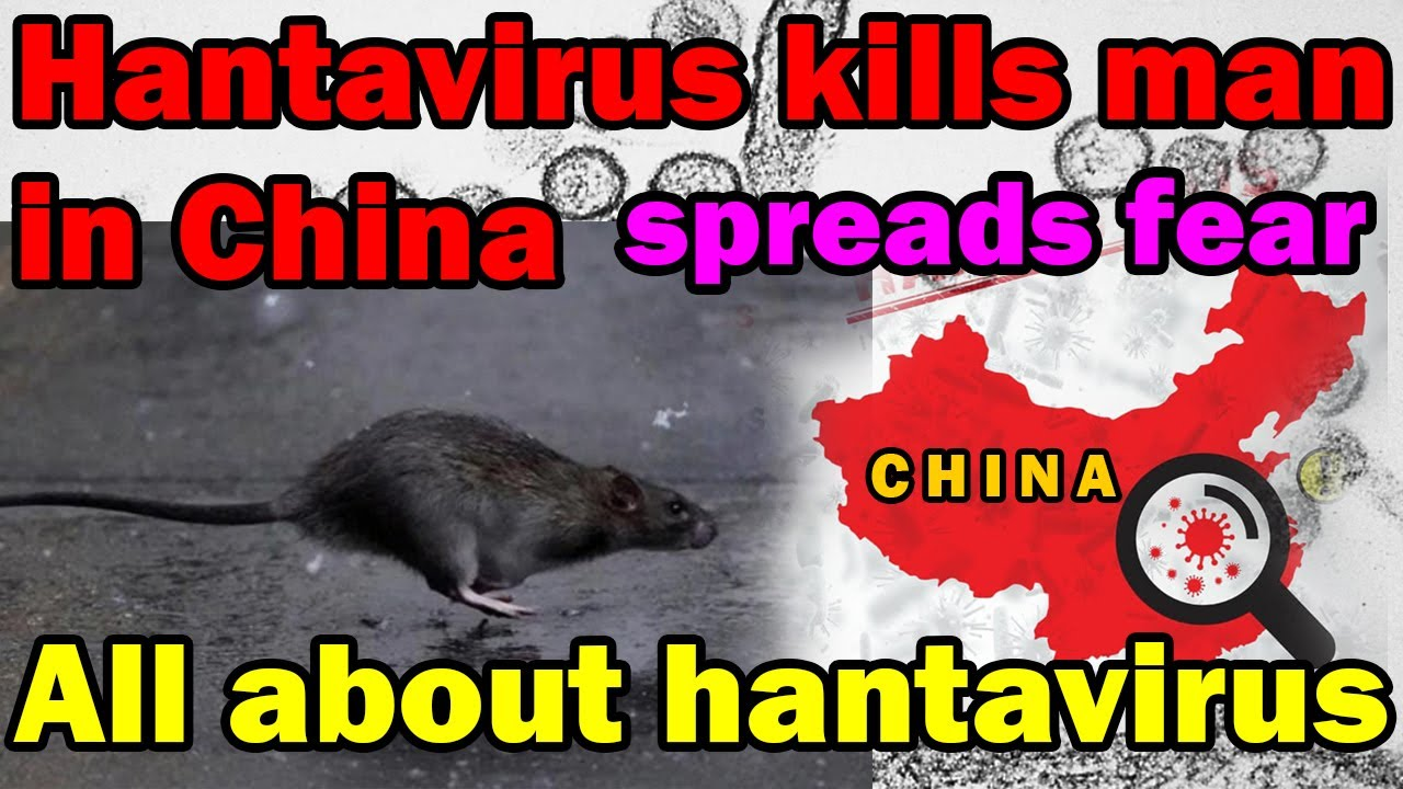 Hantavirus kills man inside bus in China - outbreak fear - All ...