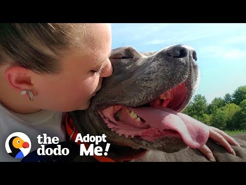 85-Pound Cane Corso Worked SO Hard To Be A Good Girl   The Dodo Adopt Me!