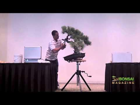 Kỹ thuật tạo hình bonsai (Demo by Ryan Neil ) bonsai styling techniques