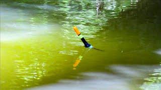 Рыбалка на ПОПЛАВОК с КОРМУШКОЙ ловля карася на поплавочную удочку в июле летом