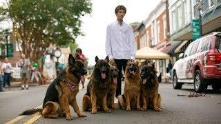 dog-whisperer-can-walk-pack-of-german-shepherds-without-leash