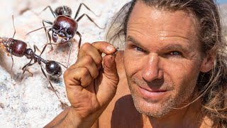 Primitive Survival Camping: Sun Roasted Ants for Breakfast
