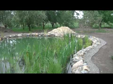 Тростник обыкновенный — Крымология