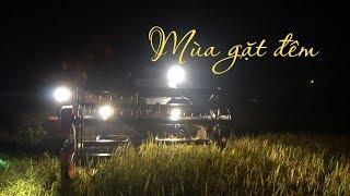 Nắng nóng bỏng rát, nông dân Hà Tĩnh đội đèn pin gặt lúa đêm