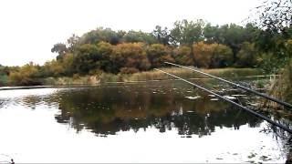 Моя рыбалка осенью на карася(Рыбалка в сентябре на удочку. Рыбалка в Херсонской области, Олешки (Цюрупинск). Ловля карася на поплавочную..., 2016-09-18T11:41:13.000Z)