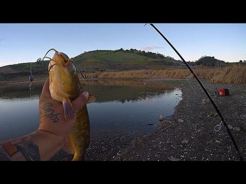 Calero Reservoir Fishing Bullhead Catfish