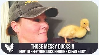 THOSE MESSY DUCKS! | HOW TO KEEP THE DUCK BROODER CLEAN AND DRY  Will it Work?