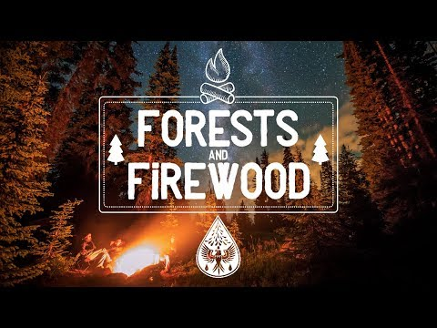 Forests & Firewood 🔥 - An IndieFolkPop Campfire Playlist 🏕️