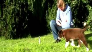 Barking Mad About Clicker Training Dvd Teaser Ii