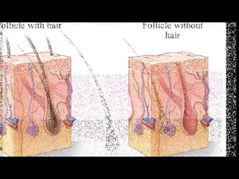 A cure for baldness? L'Oreal is working on 3D printed hair follicles that grow NEW strands