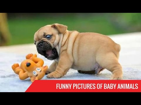Funny Pictures Of Baby Animals