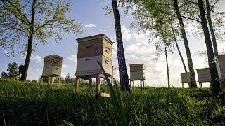 Основыпчеловодства.Урок3:промышленноепчеловодство,частьII