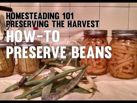 Homesteading 101 Preserving the Harvest Beans (Canning, Freezing, Pickling)