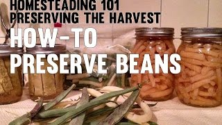 Homesteading 101 Preserving the Harvest - Beans (Canning, Freezing, Pickling)