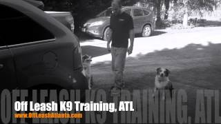 Dog Door And Car Manners | Australian Shepherds | Dog Training Atlanta