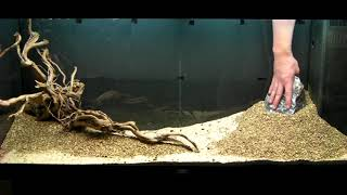 Repeat youtube video Aquarium Setup - Aquascape - Step by Step and Final Product - Live Planted Fish Tank