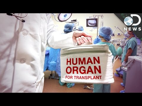 Why Do Organ Transplants Fail So Often?