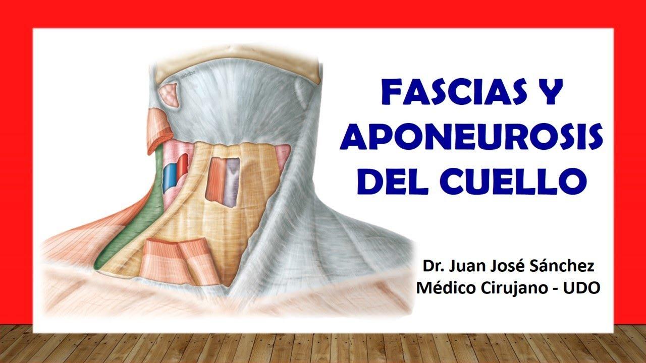 Cuello 3 - Fascias y Aponeurosis del Cuello Fácil y Sencillo - YouTube