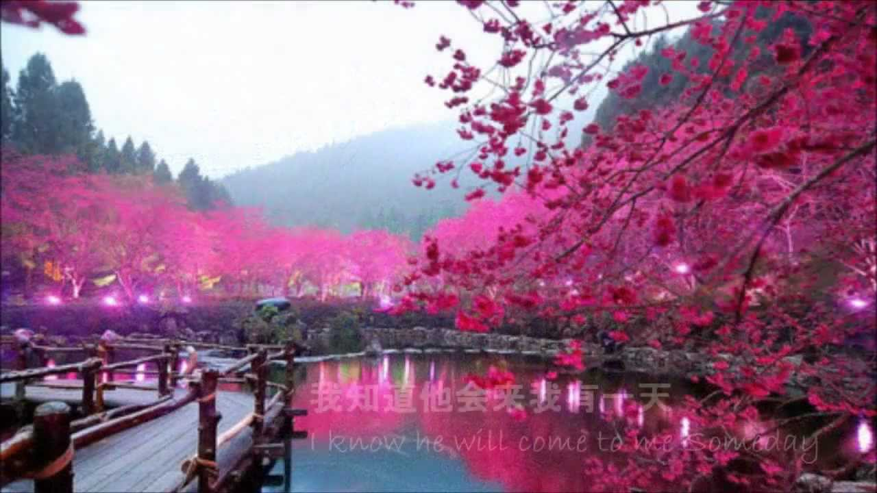 A Cherry Tree Waits In China