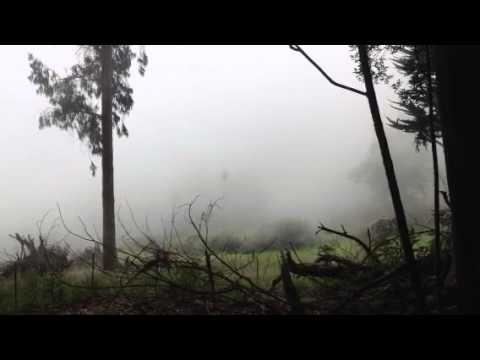 Mist rolls in at Polipoli State Park, Kula, HI