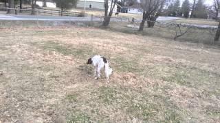 Morel Dog Training Week 1