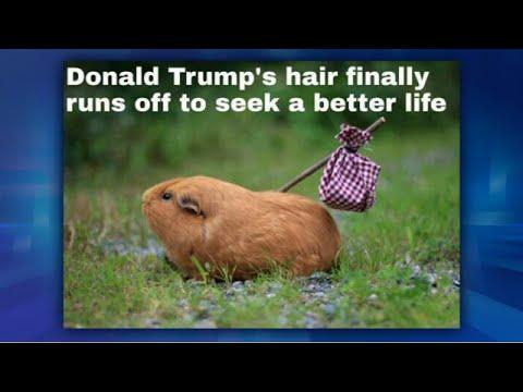 Me MeMonday: Donald Trump's Hair