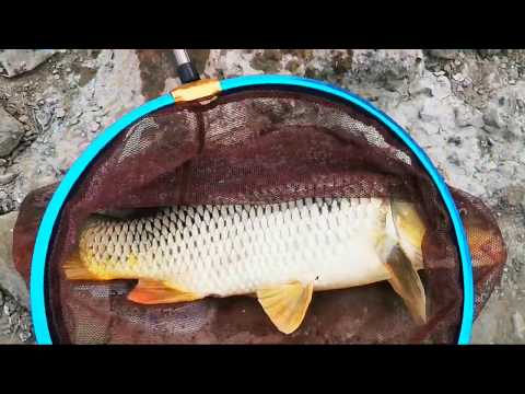 Pescuit la Crap pe Olt,Nunta Mare, public mult.