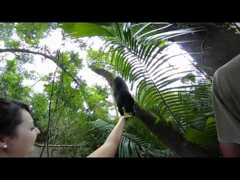 360 Feeding the Monkeys in Belize