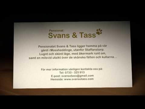 Kattpensionat Skåne - Pensionat Svans & Tass