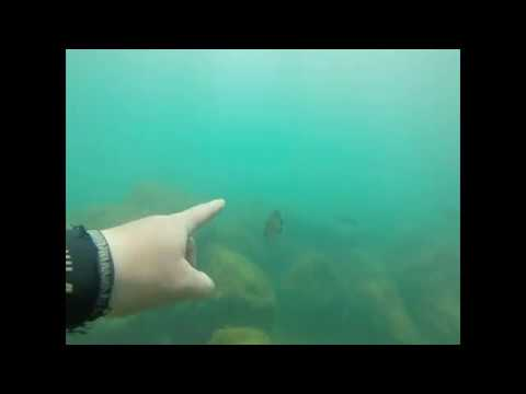 scuba-diving-montrose-harbor