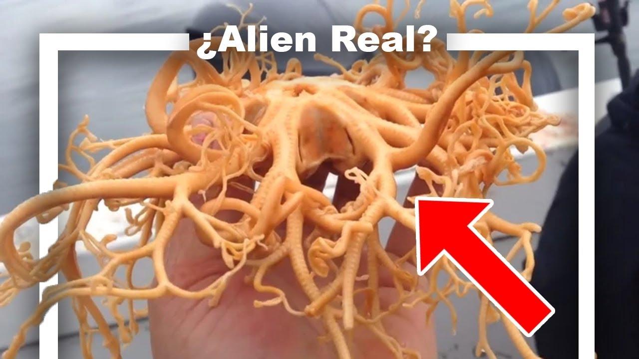 Extraterrestre Marino de Alaska | La Verdad