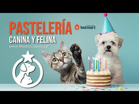 Pastelería Canina y Felina - Mejorar la alimentación diaria de perros y gatos.