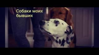 Топ 5 самых лучших фильмов про собак