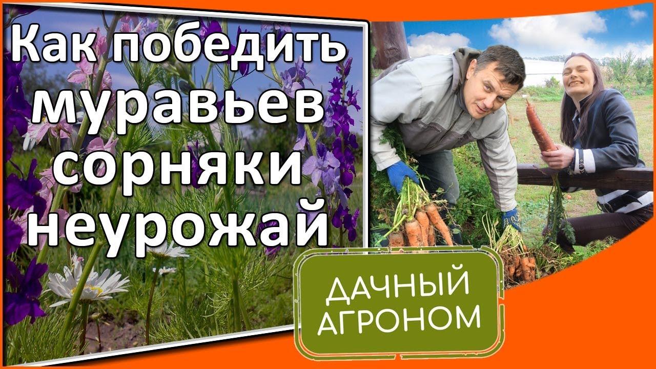 Как избавиться от муравьев, сорняков, неурожая: Опыт Дачного агронома