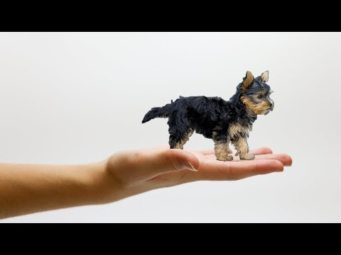 18 SMALLEST Dog Breeds On Earth!