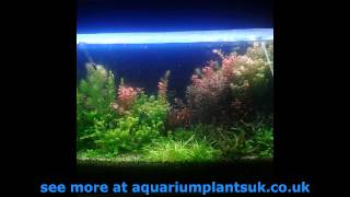 Aquarium Gardening First Steps To Your Planted Aquarium - Growing Floating Plants
