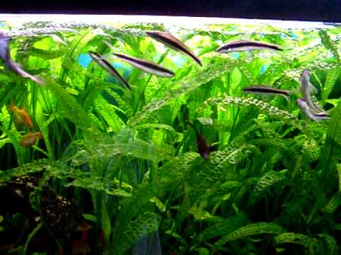 Mein 240l aquarium 120x40x50 youtube for Aquarium 120x40x50