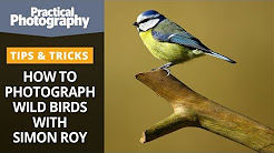 How to photograph wild birds with Simon Roy