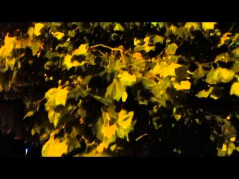 Sound Of Autumn Wind (rustling tree leaves)