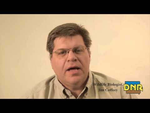 Spring Turkey Hunting | Iowa DNR