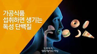 가공식품 섭취하면 생기는 독성 단백질 - (2009.1…
