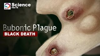 The Black Death - Bubonic Plague | Deadliest pandemic in the history (True Story)
