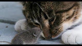 Парень завёл кота, чтобы избавиться от мыши, но что-то пошло не так.